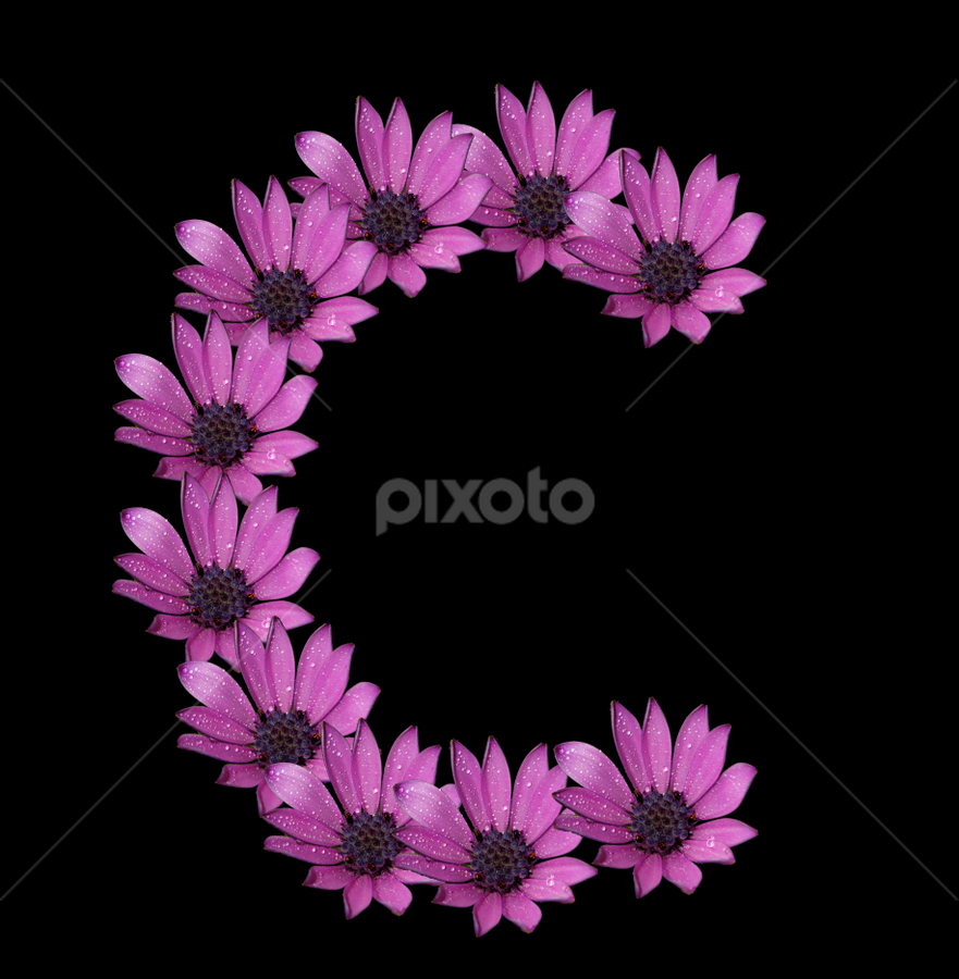 Alphabet - C by Dipali S - Typography Single Letters ( optical, optics, illustration, motivation, daisy, type, decor, inspiration, nature, calligraphy, card, place, flower, template, element, text, creative, letter, font, art, label, calligraphic, sign, frame, poster, word, typography, letters, headline, graphic, ornate, decorative, dew, captioned, title, words, quote, inscription, rain, classic, note, banner, typographic, abstract, icon, purple, c, vintage, decoration, advertisement, photo, message, motivational, typo, background, artistic, drops, design )