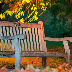 by Bonnie Filipkowski - City,  Street & Park  City Parks ( bench, autumn, 2015, fall, leaves,  )