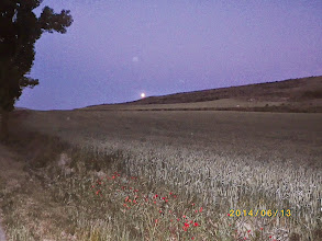 Photo: Peine lune sur les blés ( 5h du matin)