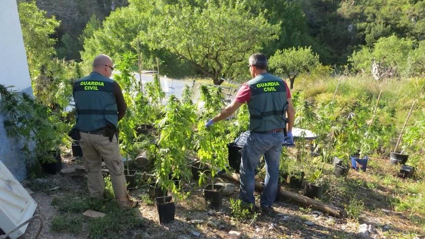 Los agentes hallaron oculta a la vista de vecinos y transeúntes una gran cantidad de plantas.