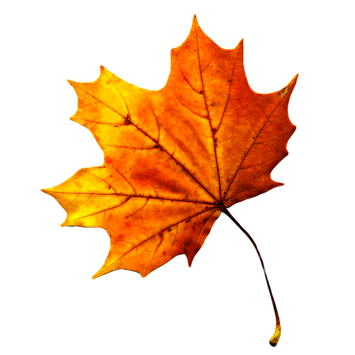 Falling Leaves Live Wallpaper Apk 3d Autumn Live Wallpaper Apk Download Apkpure Co
