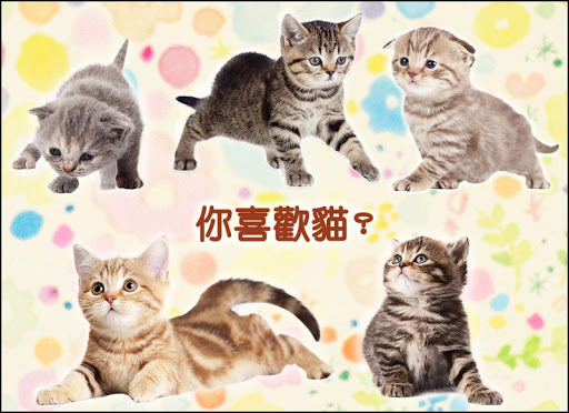 rolling cat livewallpaper04 apk - APP試玩 - 傳說中的挨踢部門