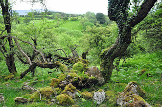 Photo: Usk valley wood
