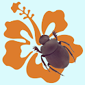 Hawaiian Scarab ID icon