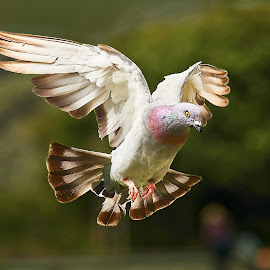 0 Bird 98567~ by Raphael RaCcoon - Animals Birds