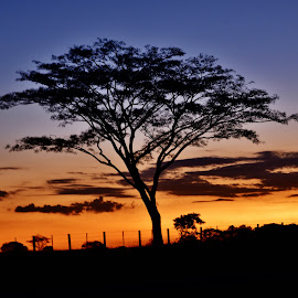 Birigui SP Brazil  by Marcello Toldi - Nature Up Close Trees & Bushes