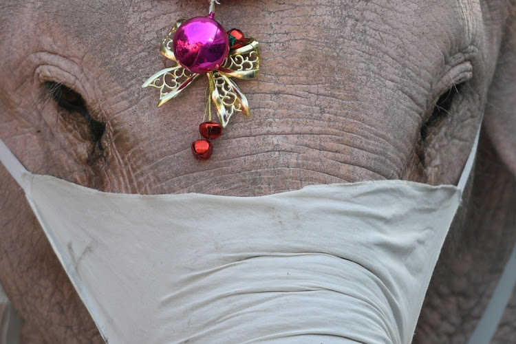 An elephant wearing a protective mask is seen during a distribution event of protective masks to students, in an effort to prevent the spread of the coronavirus disease (Covid-19), ahead of Christmas celebrations at a school in Ayutthaya, Thailand December 23, 2020.