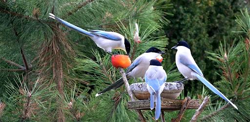 4k Garden Birds Video Live Wallpaper Apps On Google Play