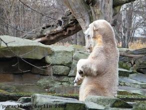 Photo: Das muss Knut im Auge behalten ;-)
