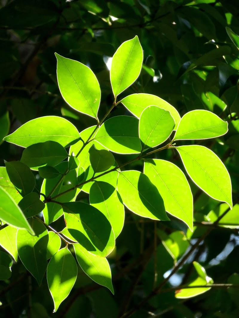 foglie brillanti di mariellaturlon