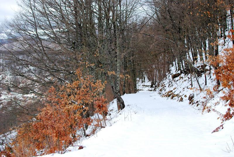 Candido bosco di FrancescaFotoViaggiatrice