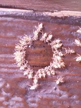 Photo: ants in honey