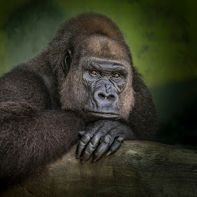 Fredrika by Heather Allen - Animals Other Mammals (  )