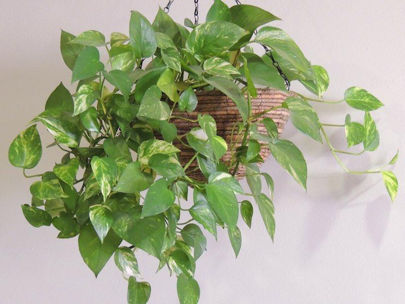 decoracion-interiores-plantas