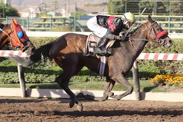 Cenicienta (Awesome Patriot) conquista Handicap (1200m-Arena-HCH).