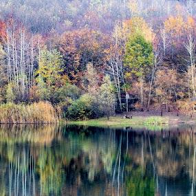 by Antun Lukšić - Landscapes Forests (  )