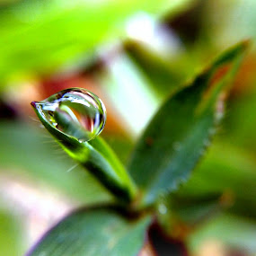 Keeping strong by Rayna Brilliantsyah - Nature Up Close Water
