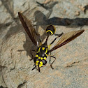 Wasp mimic Hoverfly