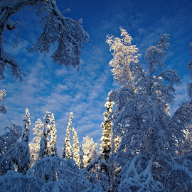 The Winter Beauty of Alaska by Rev Marc Baisden - Landscapes Forests ( forests, adventure, seasons, alaska, travel, smow )