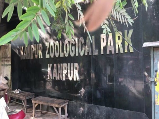 Alcoholic Monkey In India Gets Sentenced To Life In 'Zoo Prison' After Attacking 250 People