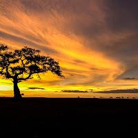 Alba nella Masai Mara national reserve di