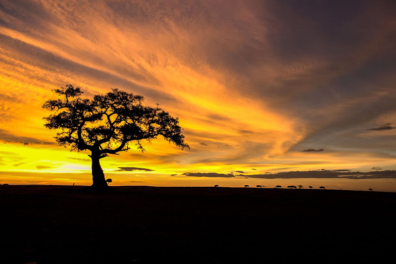 Alba nella Masai Mara national reserve di Domenico del Rosso