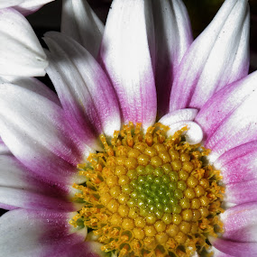 by Steven Tessy - Nature Up Close Flowers - 2011-2013 ( flower )