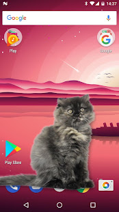 App Cat Walks in Phone Cute Joke APK for Windows Phone