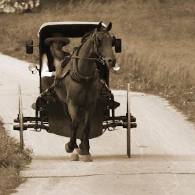 by Steven Burki - Transportation Other