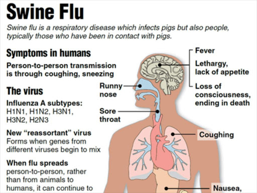 Health Ministry investigating swine flu rumour - official