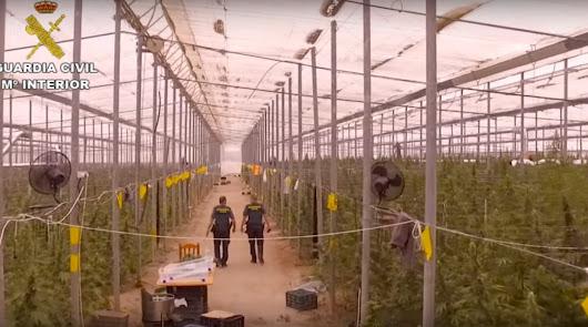 Un invernadero lleno de marihuana.
