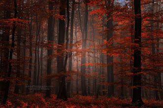"Photo: ""Spiritual Wood"" Nouvelle image dans l'album automne.  RAPPEL Ebook Best Of Autumn 2011 : http://bit.ly/tJrfWH La Crème des Photographes de Paysages : http://bit.ly/k7kBPU  Cheers - and thanks for your support here on G+  #fallphotos #autumnphotography #naturephotography #photography"
