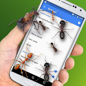 Bugs In My Phone Prank