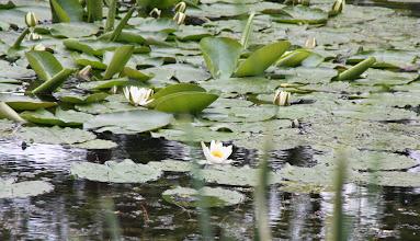 Photo: Day 65 - Pond in Dobrgazsziget #3