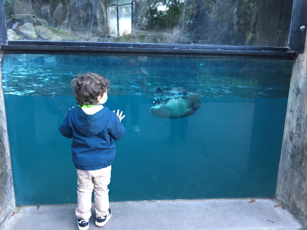 Toddler looking at river otter exhibit