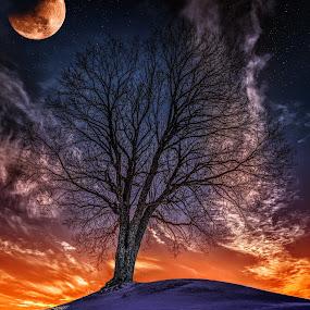 Askim, Norway 138 by IP Maesstro - Nature Up Close Trees & Bushes ( fantasy, moon, sky, ip maesstro, hdr, tree, sunset, alone, askim, norway, , #GARYFONGDRAMATICLIGHT, #WTFBOBDAVIS )