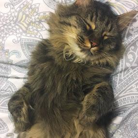 Sleep by Emma King - Animals - Cats Kittens (  )