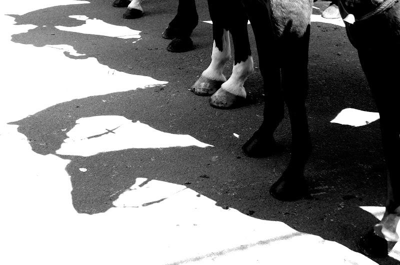 Just Cavalli  di Vikycarta
