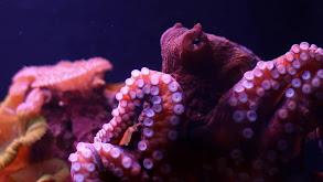 Octopus Throwdown! thumbnail