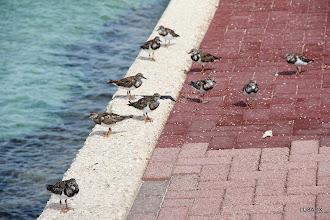 Photo: Aves sobre la costa