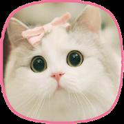 kitten wallpapers - cat images