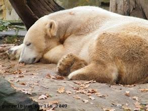 Photo: Und Knut schlaeft ;-)