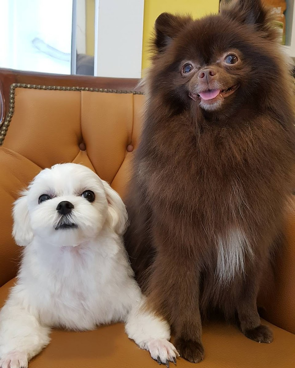 kuma and dalgom