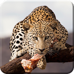 Wild Animal Live Wallpaper PRO 1.0.1 Apk
