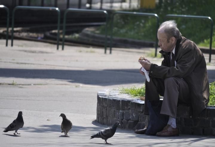 Amici piccioni di sharon