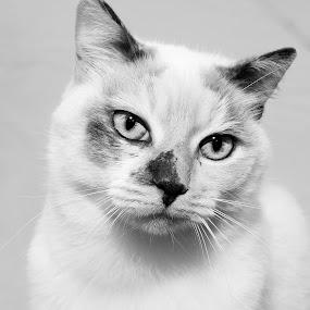 by Roxanne Wentzel - Black & White Animals