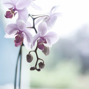 Orchid by Ami Hawker - Nature Up Close Flowers - 2011-2013