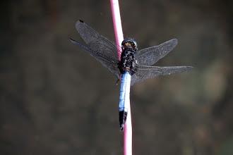 Photo: Dragon Fly