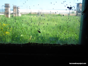 Photo: Lotsa bugs, but hardly any swallows here! Where are they?