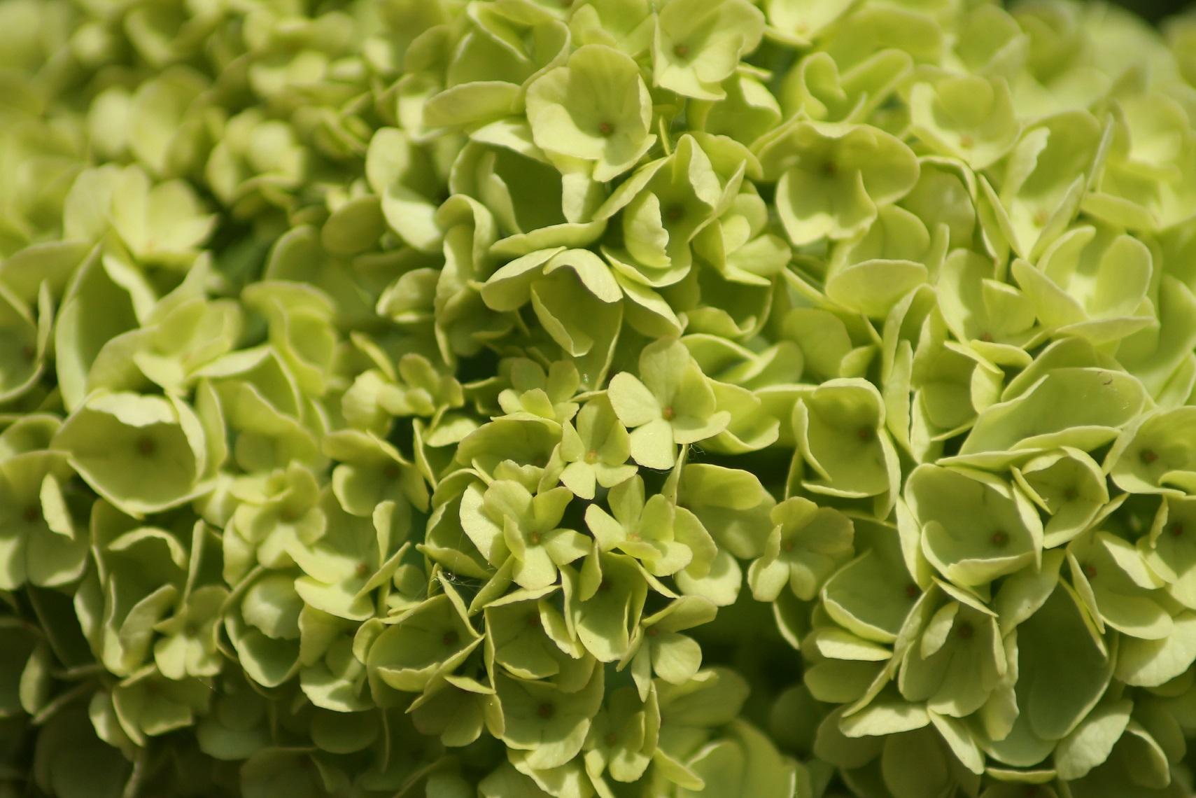 Piccoli fiori di Ari